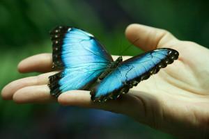 Built Around Butterflies
